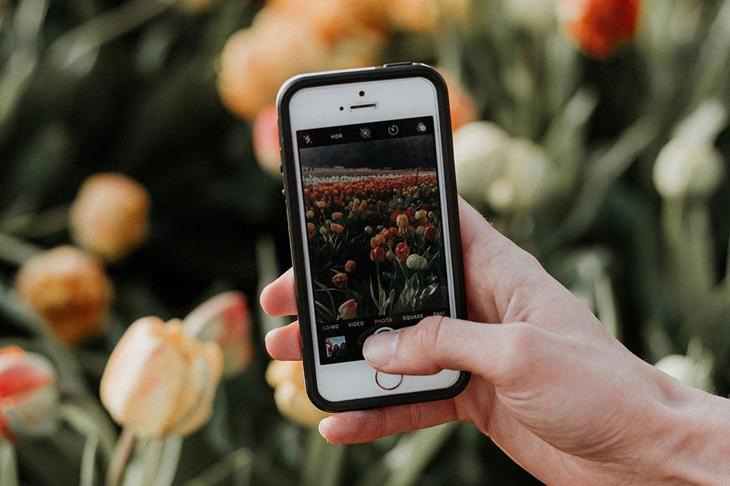 smartphone-foto-tulpen